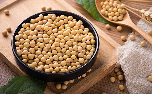 看黄豆生长形态及习性?怎么鉴别真假